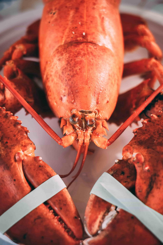 Lobster Lunch: A Taste of Maine in Greenwich Village