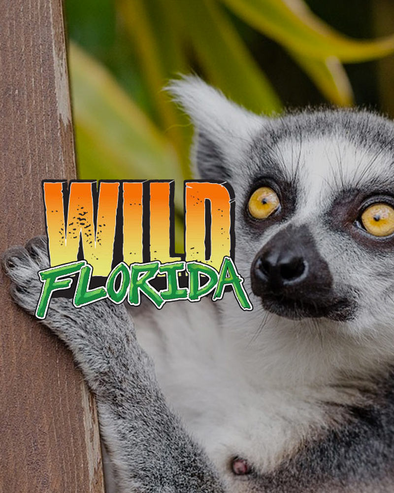 Wild Florida - Airboat Ride - Kids FREE Special