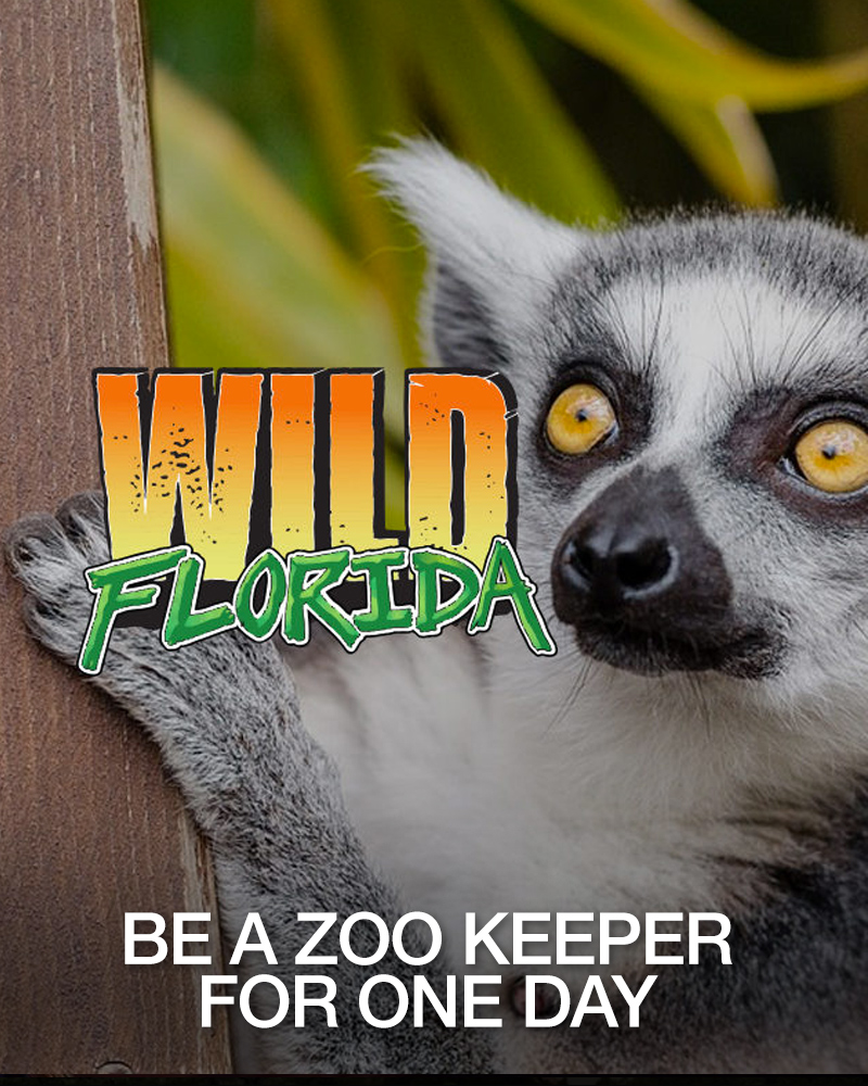WILD FLORIDA ZOO KEEPER FOR A DAY