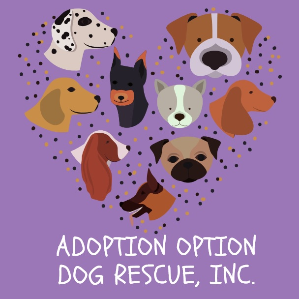 2019 Fast and Furriest Adoption Option 5k & 10k